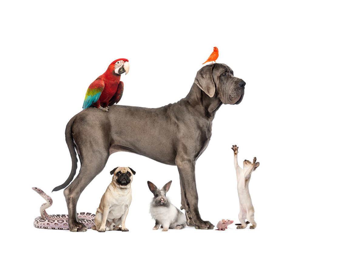 Are you a Pet Owner and Thinking of Moving House…